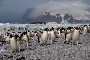 penguins-mike-bream-photography-competition